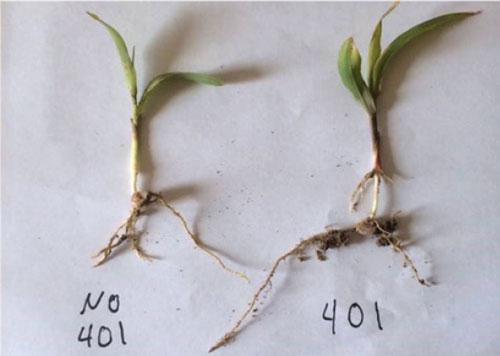 crop yield growth
