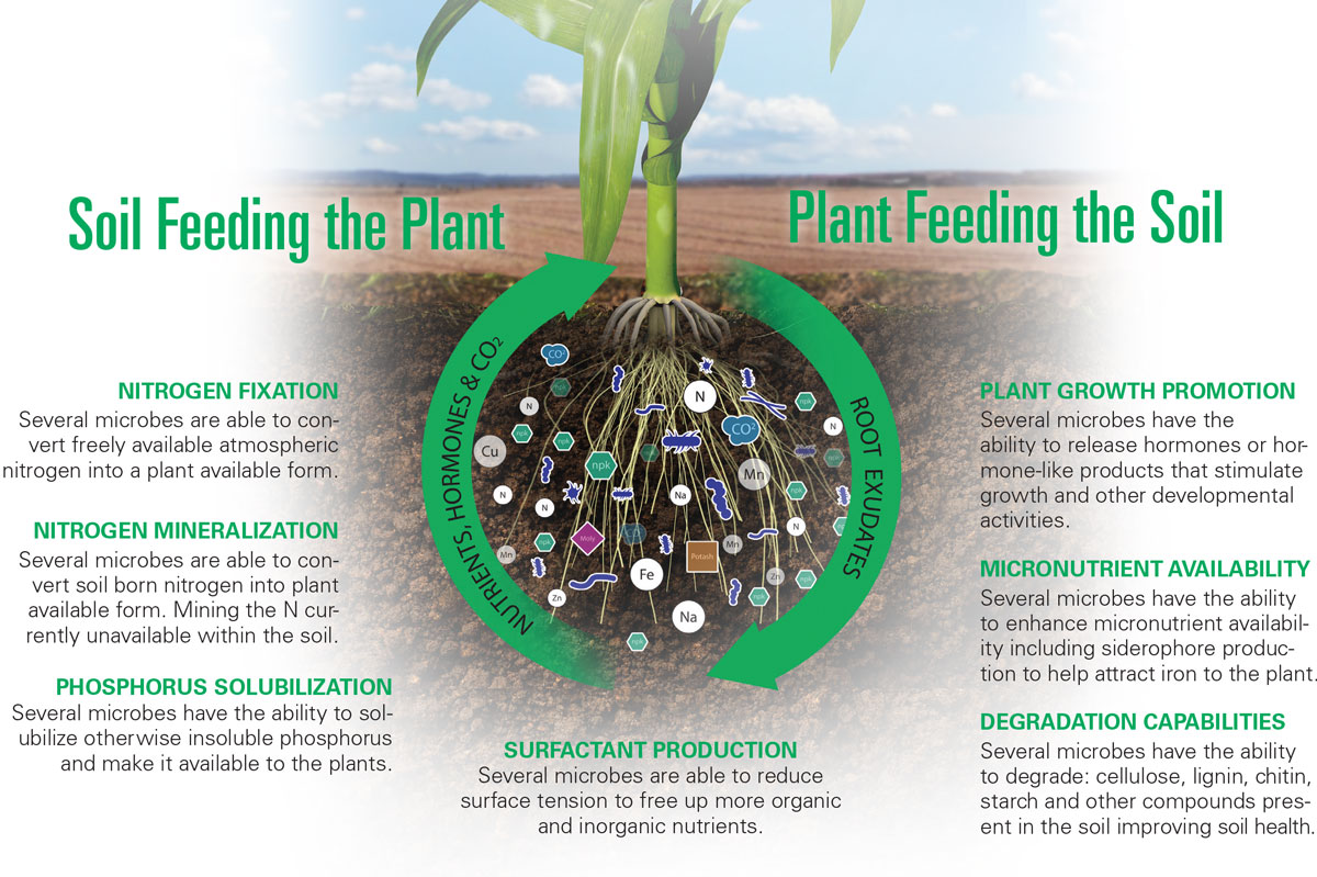 BIOSTIMULATION OF PLANTS