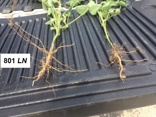 soil biostimulant